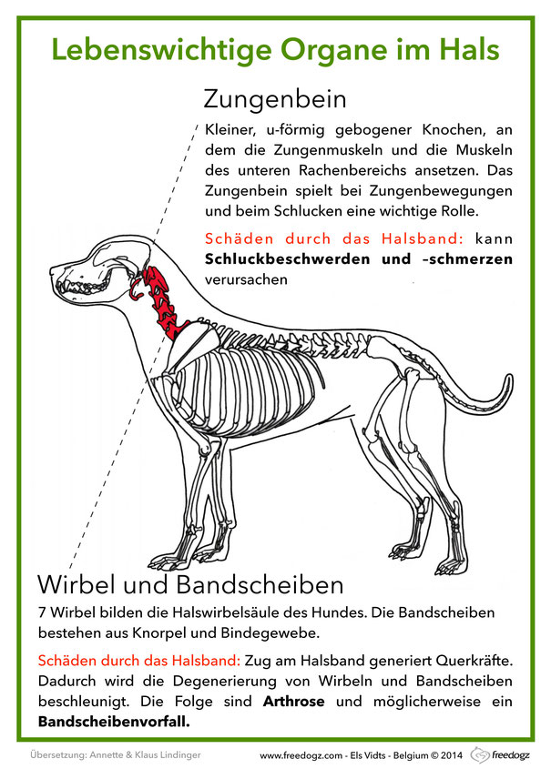 Ziemlich Hund Wirbel Anatomie Galerie - Menschliche Anatomie Bilder ...