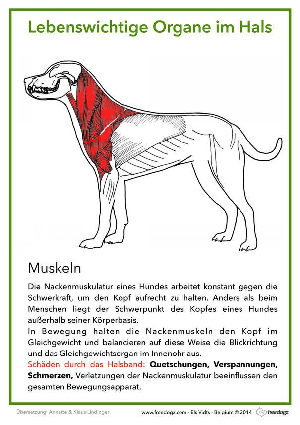Fein Hund Anatomie Organe Ideen - Menschliche Anatomie Bilder ...