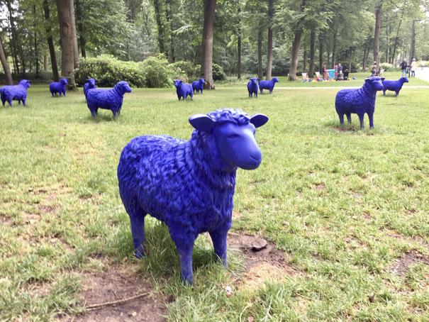 Blaue Schafe Foto: Ulrich Melzer