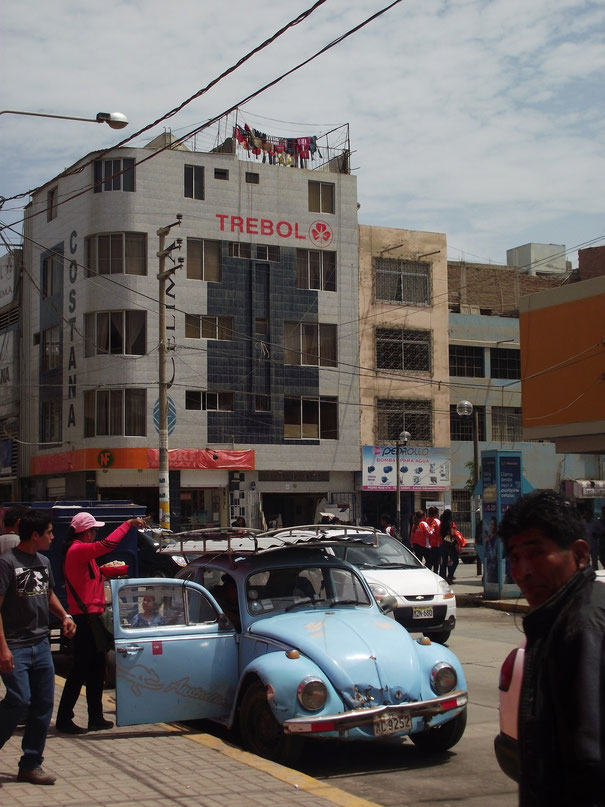 Chiclayo beetle