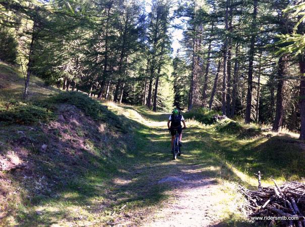 un bosco da favola ed un sentiero che mano mano diventa single track a balcone su Vens