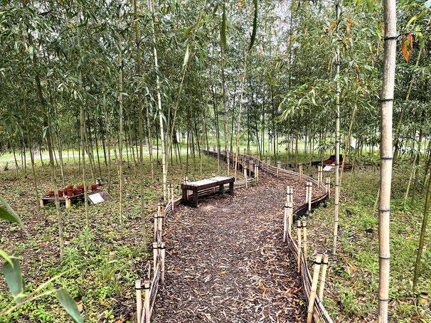 上志段味にあるしだみ古墳群ミュージアムにある竹林の中にヒメボタルがいる?