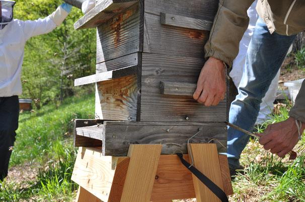 ruche warré agrandissement par le bas