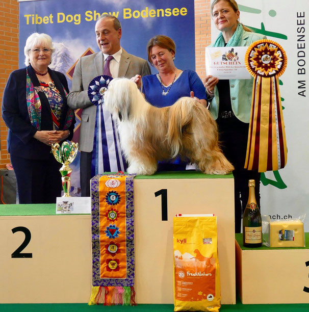"Beide Tage ""Best of the Day"" und somit Best in Show 2019 - Tibet Terrier, Mo Shu Varcas - Besitzer: Beatrix Rose&Daniela Klement/DE     Richter: Maureen Tate-Byrne/IR, Elisabeth Feuz/CH, Francesco Cochetti/IT"