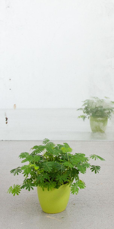 VOR DEM SPIEGEL | 2019 | Mimose, Spiegel, Lampe | Maße variabel