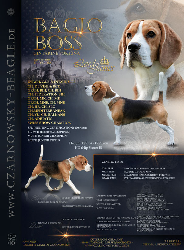 Bagio Boss Gintarine Fortuna * Lord James *, Czarnowsky , Beagle, Beagle, Beagle, Beagle, Beagle, Champions, Winner, Bagio Boss Gintarine Fortuna * Lord James *, Czarnowsky , Beagle, Beagle, Beagle, Beagle, Beagle, Champions, Winner, the Best, Love, Star