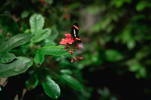 Schmetterlinge in der Biosphäre Potsdam