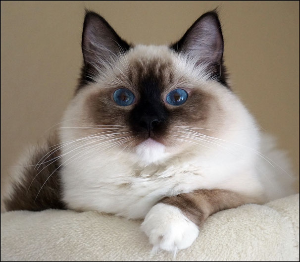 Maggy / Wynona of  Elocins Castle / seal mitted