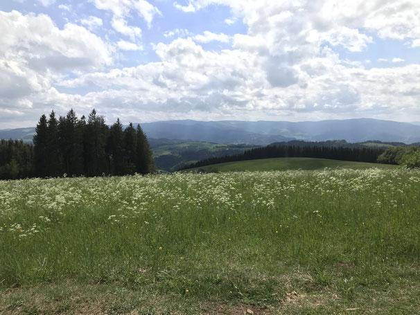 Blick vom Kandel-Südhang in Richtung Feldberg
