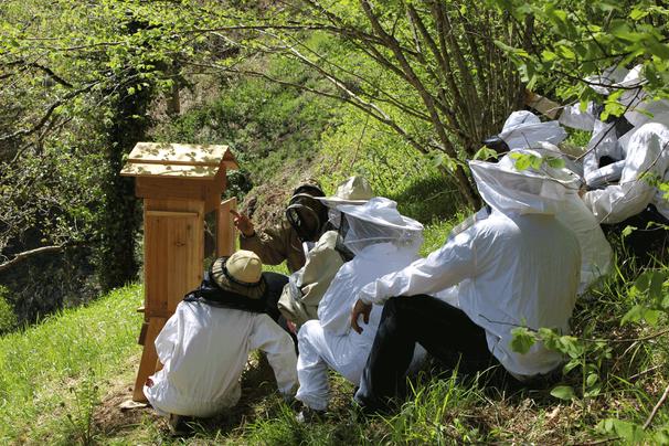Observation ruche vitrée