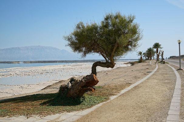 Dead Sea. 2014