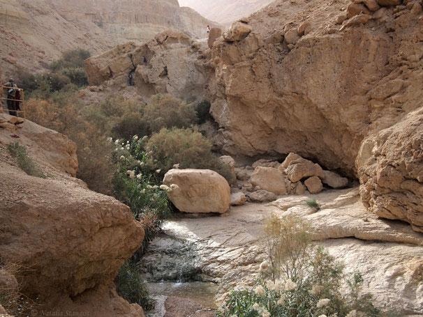 Ein Bokek, Dead Sea. 02-2011.