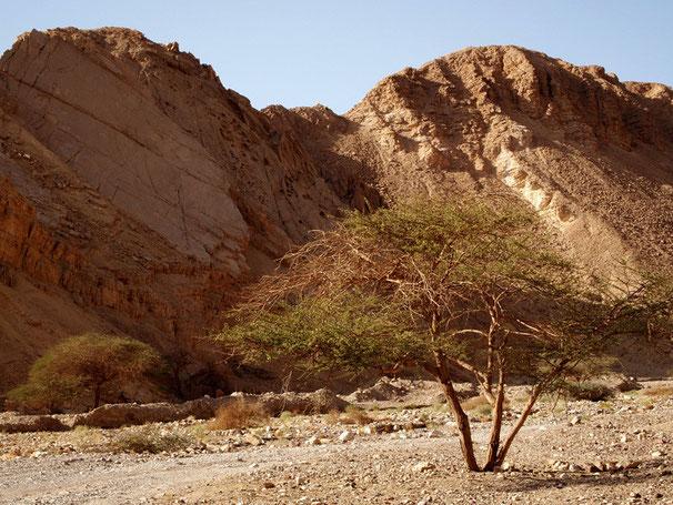 Desert. 09-2010