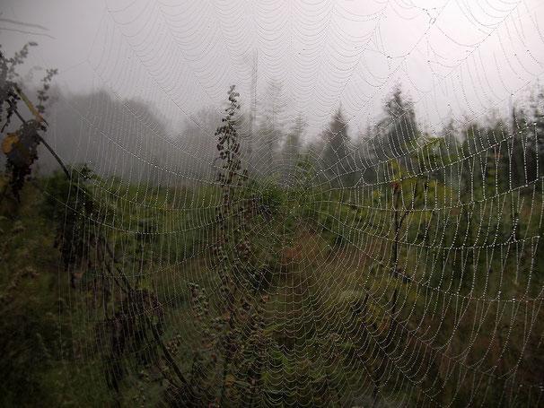 Cobweb, 08-2011