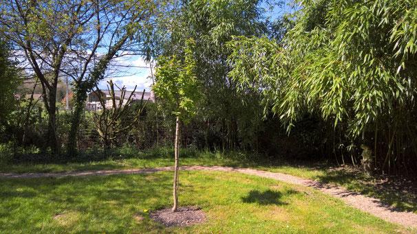 In diesem Frühling habe ich eine Mispel (Bild) und ein Mandelbaum gepflanzt