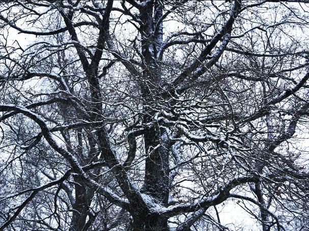 Kunstwerk A TREE'S DREAMS auf ARTS IV als Acrylglas- oder Schattenfugenrahmen-Druck bestellen