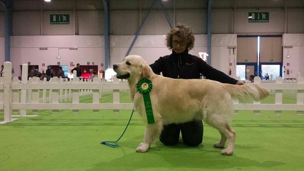 Mostra Speciale Insubria Winner  - 3°EXC - Giudice  Ritta Liisa Lehtonen