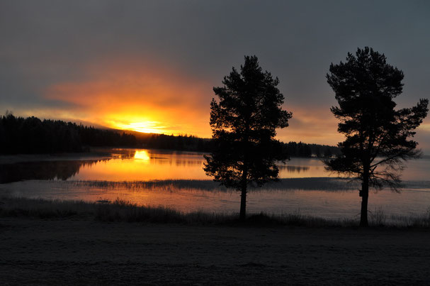 Huskyfarm in Lappland