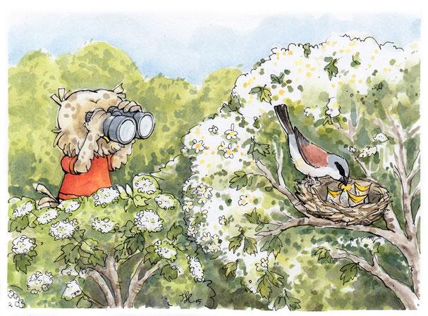 Steinkauz Fabian betrachtet mit einem Fernglas einen Neuntöter, der seine Jungen im Nest füttert