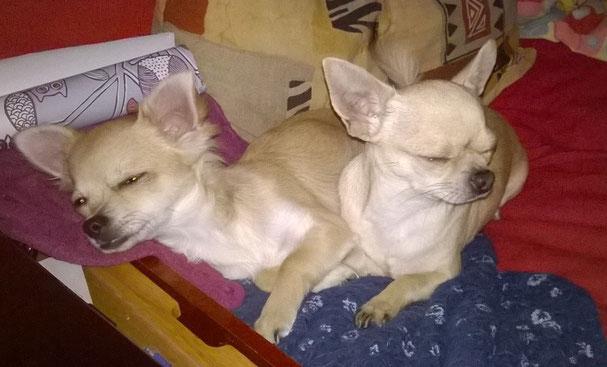 Léo&Maya 24/12/14