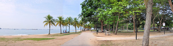 Die palmenumsäumte East Coast