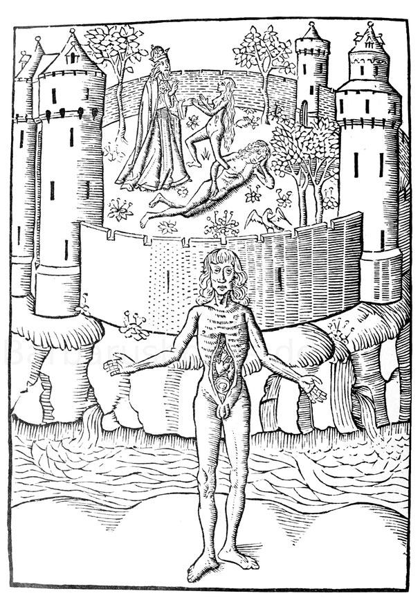 Erschaffung der Eva und Bau des Menschen, aus dem niederländischen Bartholomäus Anglicus, Haarlem 1485.
