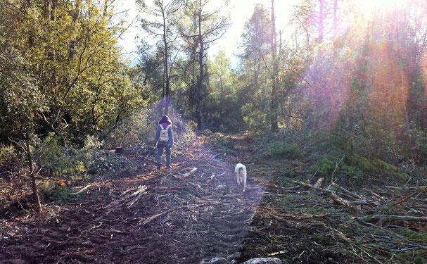 """""""Les forêts précèdent les hommes, les déserts les suivent"""". (Chateaubriand) photo Didier Lesoil"""