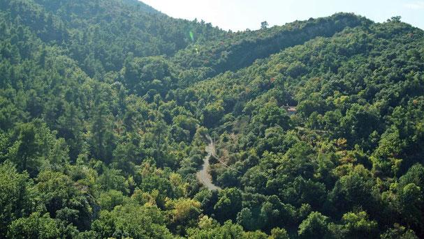 """la 2ème région forestière de France : """"l'illusion d'une ressource quasi-illimitée"""""""