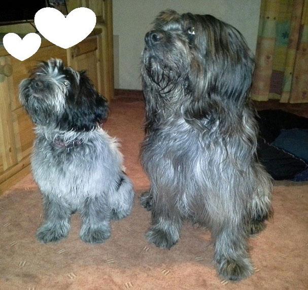 Links Bella und rechts ihr  Weggefährte Asco