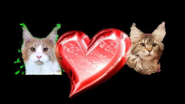 Gr. Int. Ch. Alpha Cat's Gi Otto & Ch. Special Power Cat's Calibra