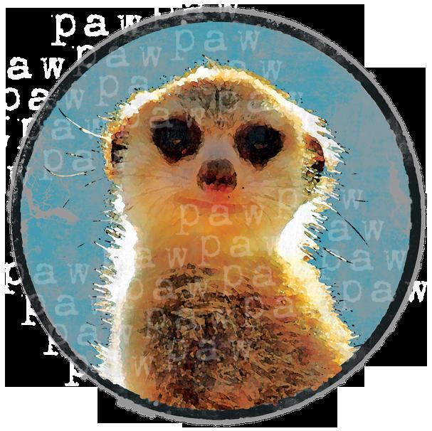 Erdmännchen,Morgen,Tier,lustige,comic,coole,tierisch,Nagetier,Afica,Surikate,Suricata suricatta,Tiere,Wildnis,safari,afrika,wildnis,wild,Geschenkidee,Weihnachten,funny,zoo,wildtier,shirtdesign, shirt,fashion,mode