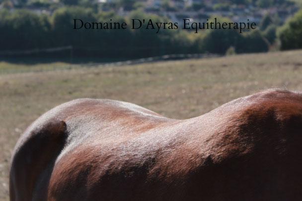 Un temps pour soi au contact des chevaux - Equitherapie en Correze