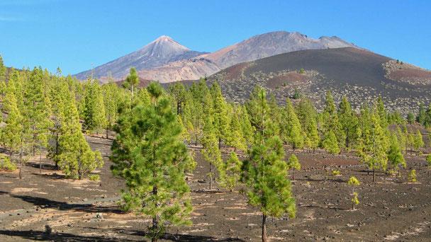 Reisebericht Pico del Teide, wandern, Teneriffa, Spanien