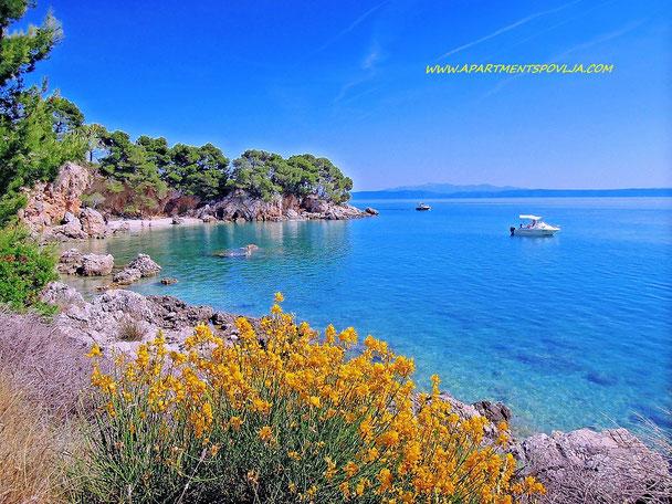 #makarska #makarskariviera #makarskabeaches #adriatic #sea #mare #meer #dalmatia #dalmazia #dalmatien #croatia #croazia #chorwacja #kroatien #apartmentspovlja #holidayapartments #vacation #vacanze #urlaub