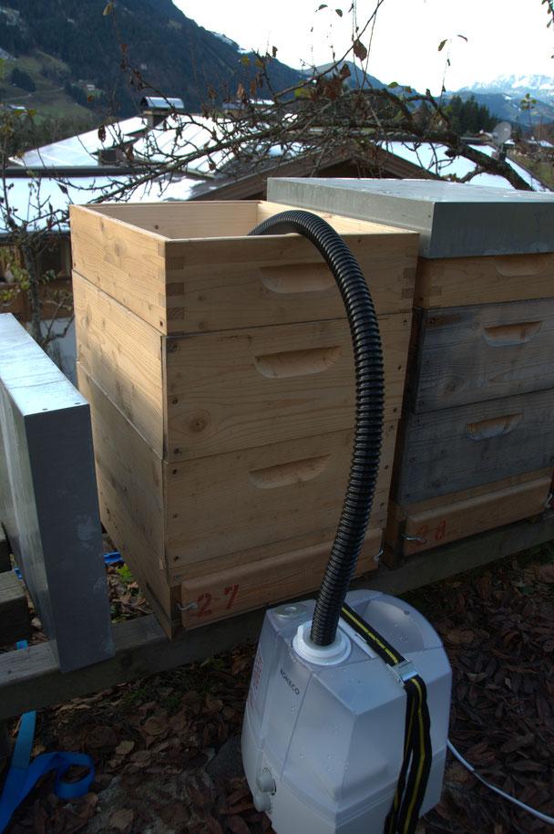 Restentmilbung Bienenvölker