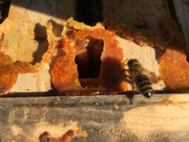 propolis imkerei themel bio imkerei bienen honig wohlbefinden gesundheit natur und. Black Bedroom Furniture Sets. Home Design Ideas