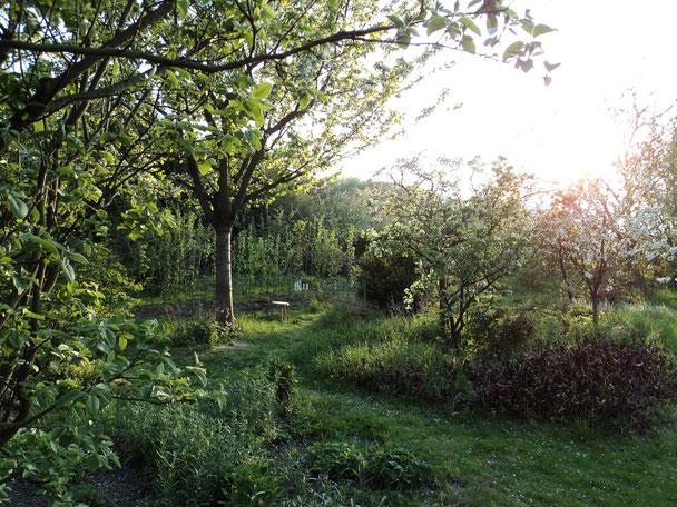 artenreicher obstgarten in blüte