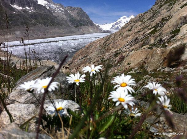 ....eccolo!!....il ghiacciaio dell'Aletsch...sito dell'UNESCO  pratrimonio dell'umanità
