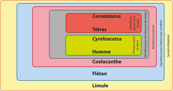 Groupes emboités issus du tableau ci-dessus (matrice de caractères). Source : http://edu.mnhn.fr/mod/page/view.php?id=3065