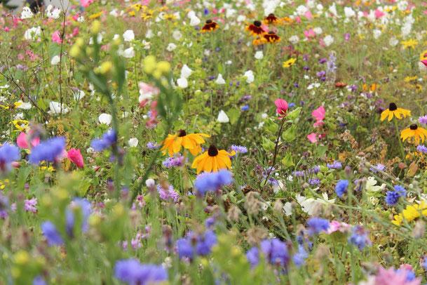Blumen- und Staudenmischung (Bild: Egapark Erfurt)