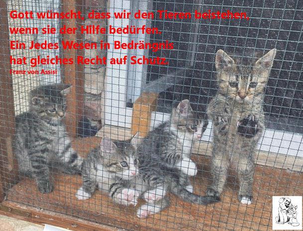 Gott wünscht, dass wir den Tieren beistehen, wenn sie der Hilfe bedürfen. Ein jedes wesen in Bedrängnis hat gleiches Recht auf Schutz. (Fr.v. Assisi)