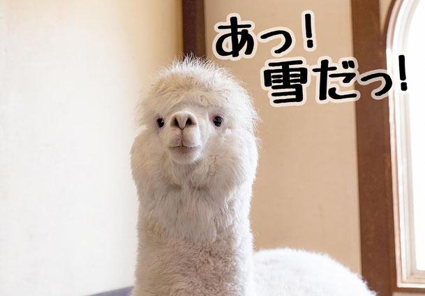 雪が降ってるを英語で|明日使える英会話 by えいごシャワー@名古屋