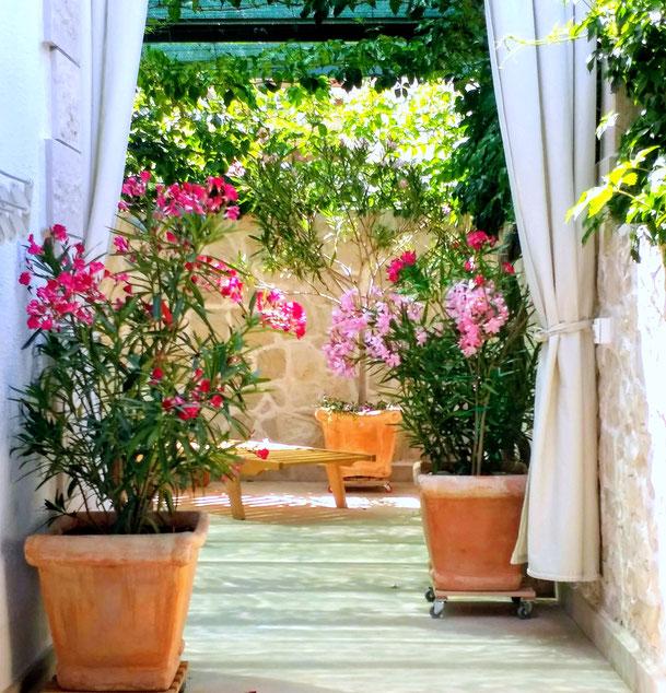 #povlja #islandbrac #wyspabrac #isolabrac #inselbrac #adriatic #sea #mare #meer #dalmatia #dalmazia #dalmatien #croatia #croazia #chorwacja #kroatien #apartmentspovlja #holidayapartments #vacation #vacanze #urlaub #flowers #bougainvillea
