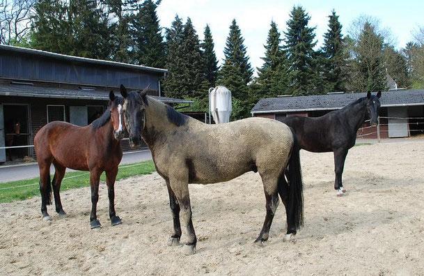 """Morgens Tango, abends Fango- Donald hat diesen Satz verinnerlicht, wie man sieht. Der Schrecken aller Pferdepfleger:-) (Und nein, wir haben kein """"Dressur""""Pferd in diesem Winter eingedeckt- und sie leben noch...)"""