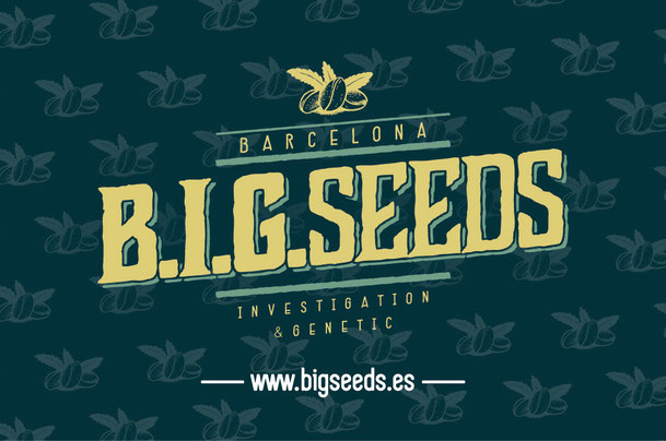 sorteo semillas marihuana feminizadas, concurso semillas marihuana feminizadas BIG Seeds, semillas marihuana gratis