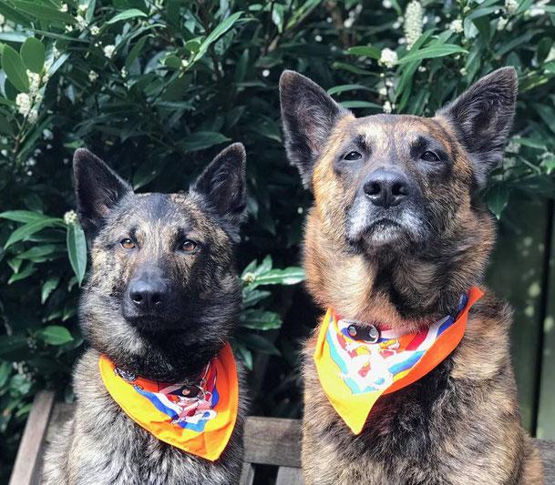 Dyson en Rendor zijn koningsgezind... dus op koningsdag dragen zij hun oranje halsdoeken...