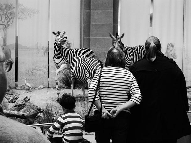 Zebra, Streifen, gestreift, Frau, Kind, Mann, Museum König, stripes, people with stripes and zebra, Schwarzweissfotografie, kreative Fotografie, Fototipps