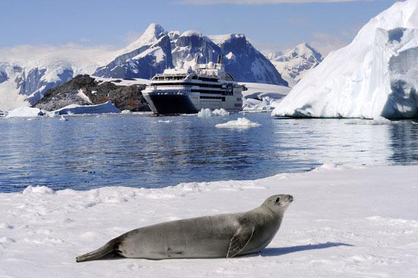 Gemeinsame Kooperation zwischen PONANT & National Geographic // © PONANT Cruises