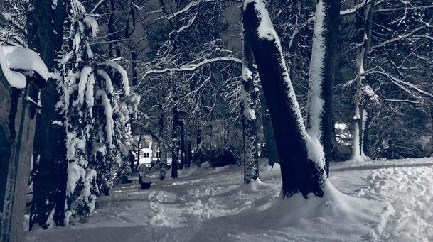 Winter in Bogenhausen, München, Foto: Jeanne Surmont