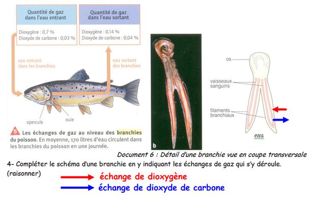 L1rom site de svt ostrevant - Dioxyde de carbone danger ...
